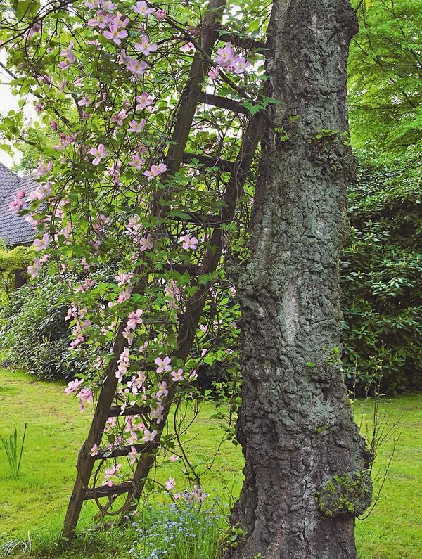 Опора для вьющихся растений из старой лестницы