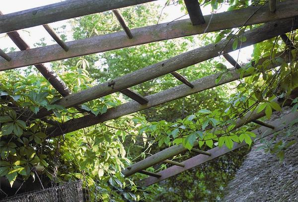 Из нескольких лестниц можно сделать перголу или крытую аллею