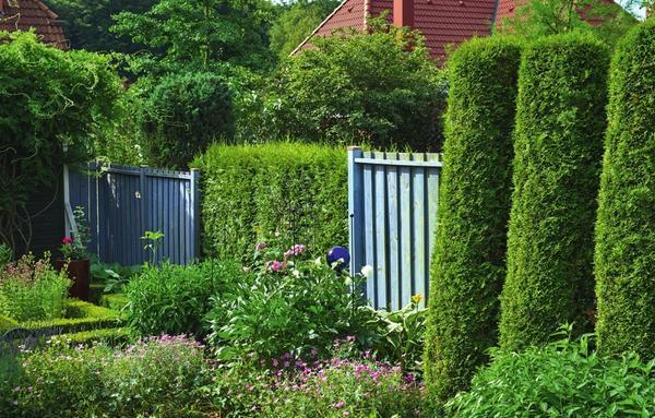 Разнообразие: колонновидные туи, деревянные модули и вставки из классической живой изгороди - такой необычный забор никого не оставит равнодушным!