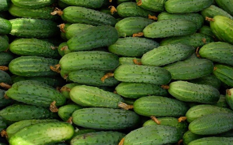 Эффективный метод выращивания раннего урожая огурцов